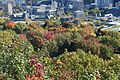 View @ Chalet du Mont-Royal @ Mount Royal @ Ville-Marie @ Montreal (30297999602).jpg