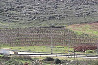 View from Tel Shiloh IMG 3019.JPG