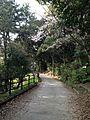 View in Nishi Park.jpg