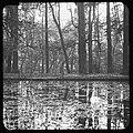 Vijver en bomen park Sonsbeek te Arnhem, Bestanddeelnr 193-0695.jpg