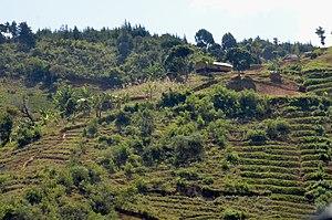 Ndali people -  The village of Kalembo