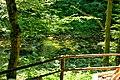 Vintgar Gorge (35772799676).jpg