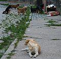 Wałbrzych zwierzęta domowe 27.07.11 pl.jpg