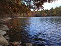 Walden Pond shoreline in fall (Massachusetts).jpg