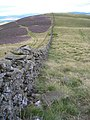 Wall heading over Milky Law - geograph.org.uk - 217865.jpg