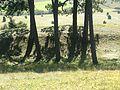 Wall und Graben auf dem Ipf - panoramio.jpg