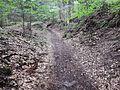 Wanderweg - panoramio (82).jpg