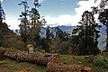 Wangdue Phodrang-38-Baumstamm-2015-gje.jpg
