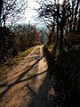 Way With Shadow - panoramio.jpg