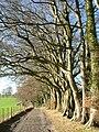 Wayfarer's Way - geograph.org.uk - 50869.jpg