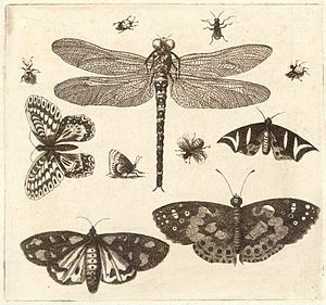 Wenceslas Hollar - A dragonfly, ladybirds, and...