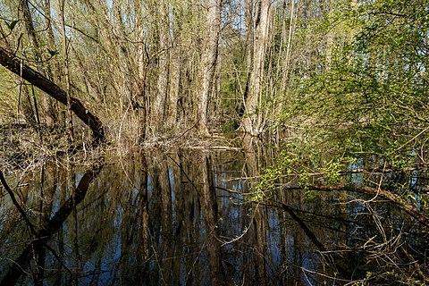 Wetland in the Weiherwald, Weiherfeld, Karlsruhe