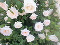 White flowers EL Bez.jpg