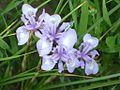 Wild flowers- Alamarvdasht گلهای بهاری علامرودشت - panoramio.jpg