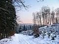 Winter im Teutoburger Wald25.jpg