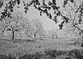 Woeste gronden, natuurschoon, boomgaarden, bloei, Landgoed Soelen, Bestanddeelnr 162-1220.jpg