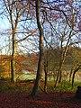 Woodland, Greys - geograph.org.uk - 1049421.jpg