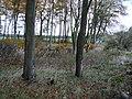 Woodland near Shawsmill - geograph.org.uk - 276781.jpg