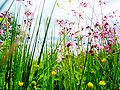 XN Meadow wet 02.jpg