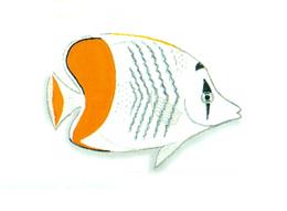 XRF-Chaetodon madagaskariensis.png