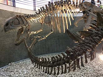 Beijing Museum of Natural History - Image: Yangchuanosaurus and Tuojiangosaurus at the Beijing Museum of Natural History