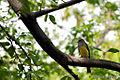 Yellow Bird - Camino de Pasoancho (Cali) (4110697037).jpg