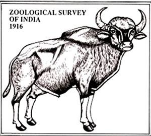 Zoological Survey of India