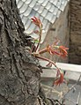 Zhaoyuan, Yantai, Shandong, China - panoramio (1).jpg