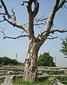 'By @ibnAzhar'-2000 yr Old Sirkup 2nd City of Taxila-Pakistan (18).JPG