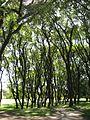 Árboles - panoramio.jpg