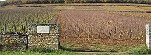 Pernand-Vergelesses wine - The Premier Cru vineyard Île de Vergelesses.