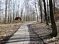 Žilinský lesopark - panoramio.jpg