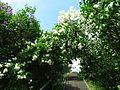 Ботанічний сад ім. М.Гришка IMG 9171.jpg