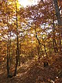 Гора, есен.jpg
