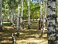 Деревня Седякбаш - panoramio - Matveev Michail.jpg