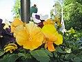 Елагин остров.Цветы в уличной вазе.JPG