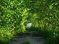 Зелёный туннель - panoramio.jpg