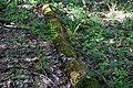 Змієві вали Папороть та кропива DSC 0627.jpg