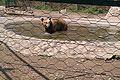 Зоолошка Скопје 51.jpg