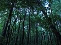 Измайловский парк - panoramio (14).jpg