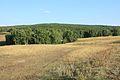 Лесистый холм - panoramio.jpg