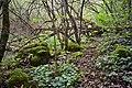 Ліс у Китайгороді, Хмельницька область.jpg