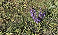 Осінні квіти Балки Бальчанської.jpg