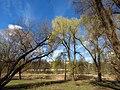 Парк «Нивки» (східна частина) IMG 7546.jpg