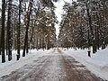 Парк зимой.jpg
