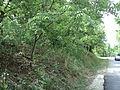 Парк шума Гази Баба во мај (6).JPG