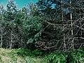 Планина Озрен (77).jpg