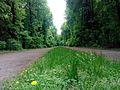 Снопківський парк, травень,.jpg