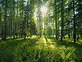 Солнечная сказка - panoramio.jpg