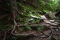 Таємничий ліс під Вухатим Каменем.jpg